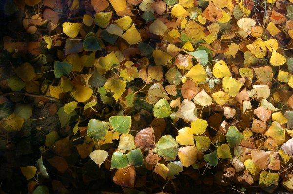 fulles i aigua